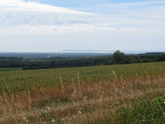 View from Selhurstpark Road across wheat field
