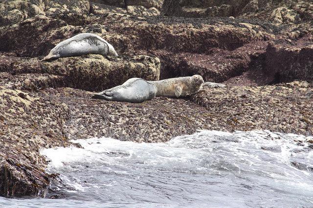 Seals on Seal Rock