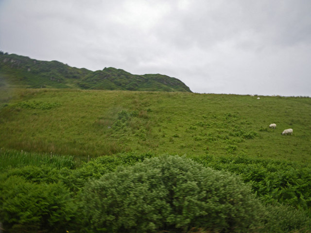 Sheep grazing in expansive meadow