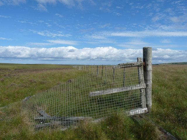 Fence, Blar an Fhraoich