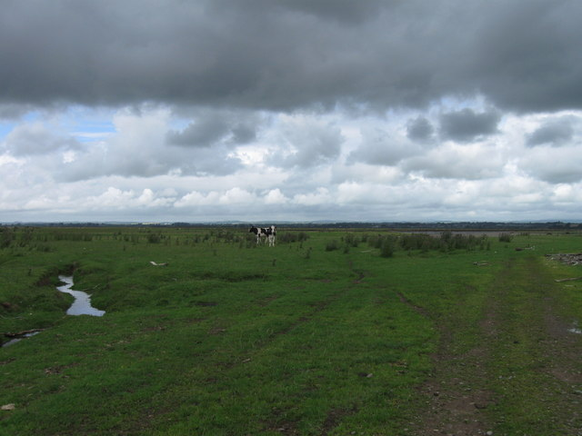 Rockcliffe Marsh with cows