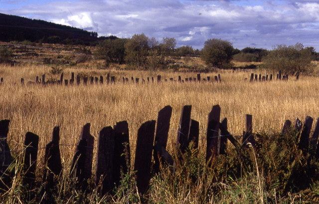 Slate fences