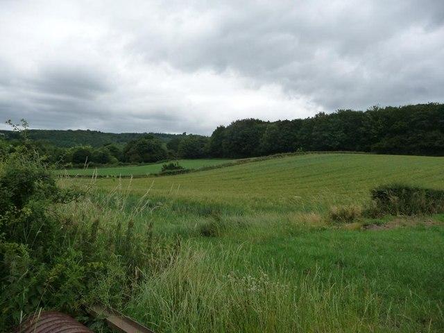 Fields below the woods