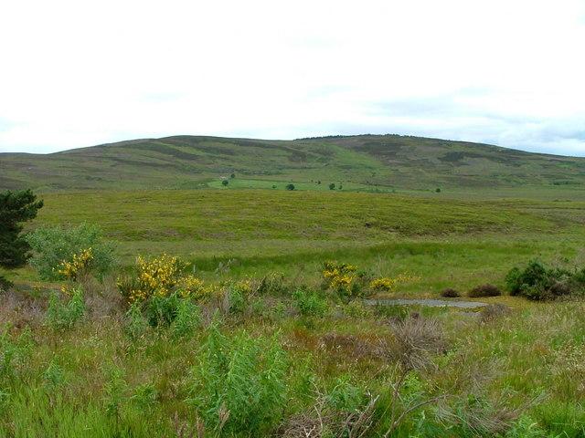 Moorland at Lochnellan
