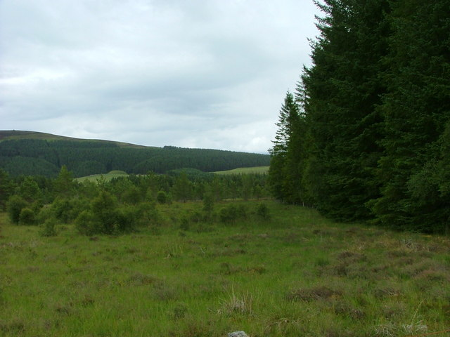 Edge of Upper Tomvaich Wood