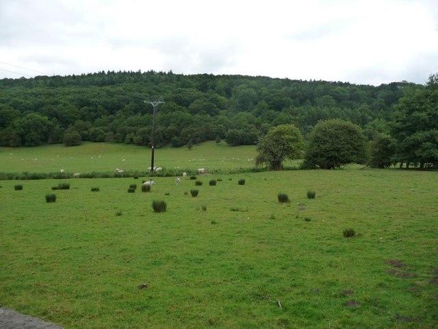 Sheep grazing below Elm Hag