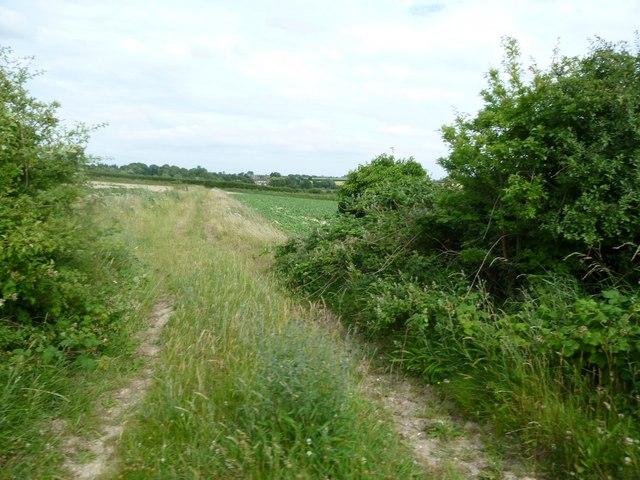 Wighton: field track