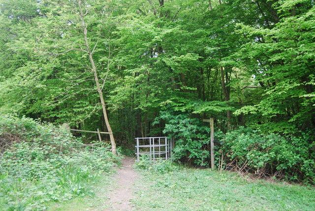 Footpath entering Leamland Wood