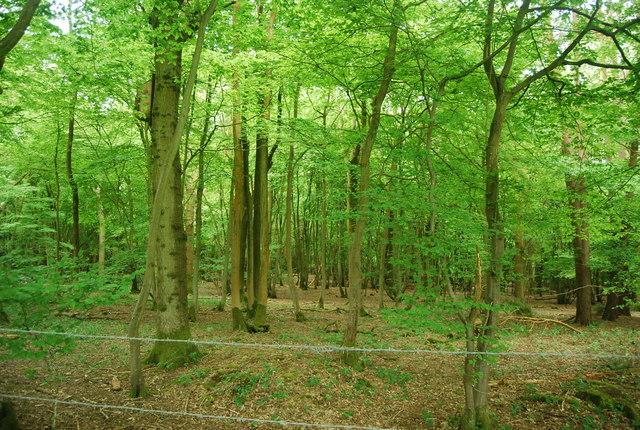 Leamland Wood