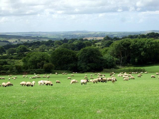 Sheep pasture near Brwyn-nant