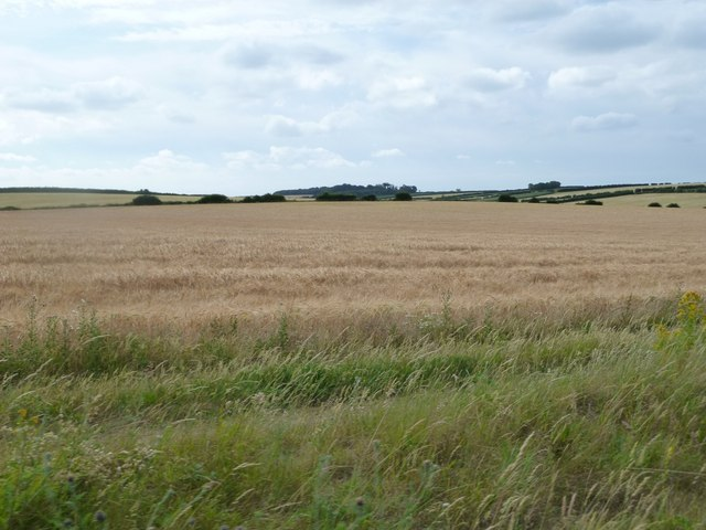 Cornfields between Wighton and Warham