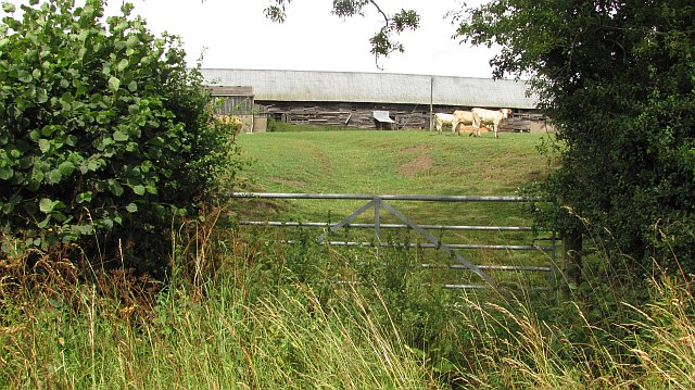 Cattle, Westhope