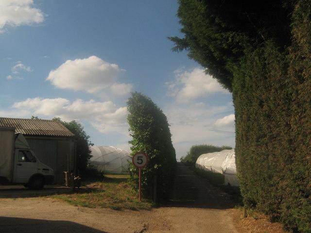 Track in Quaives Farm