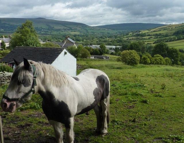 Bradwell pony