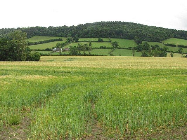 Barley, Hope Dale