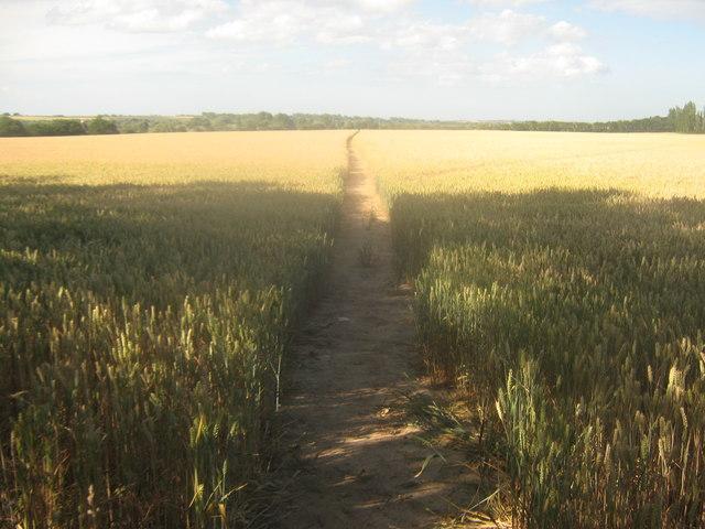 Footpath towards Hollybush Lane