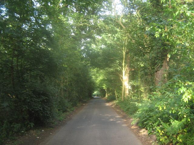 Stodmarsh Road through two woods