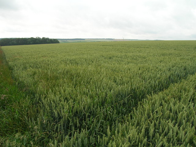 Farmland near  Kirby Wold Farm
