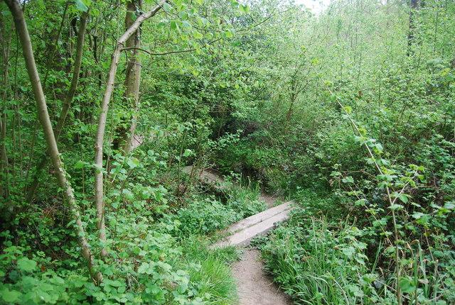 Footbridges in Pain's Wood