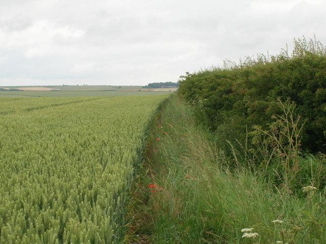 Field margin near Linton Wold Farm
