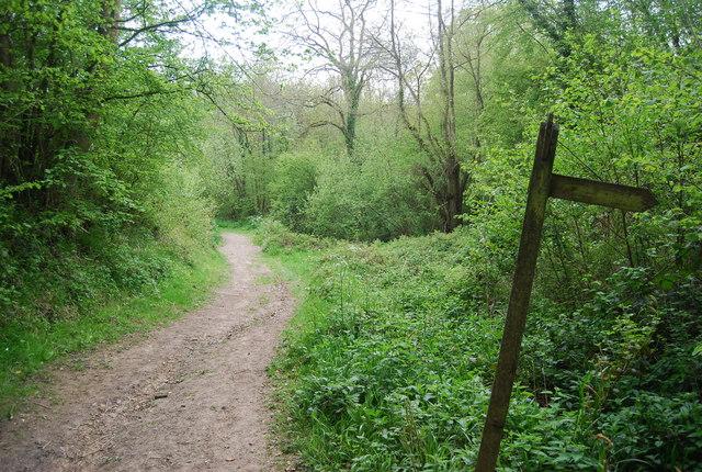 Footpath junction in Pain's Wood