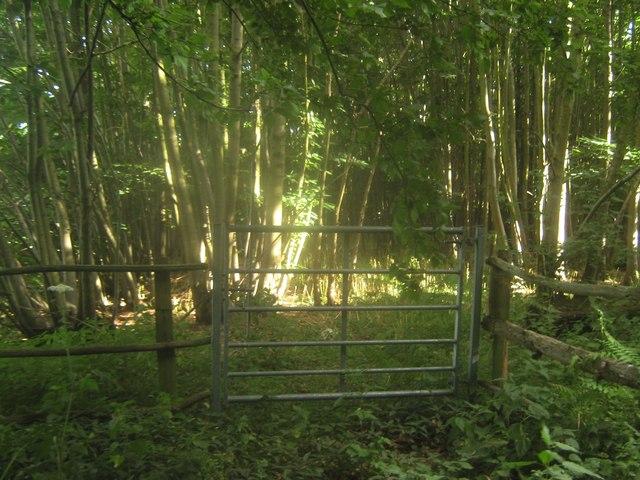 Bridlegate in Trenleypark Wood
