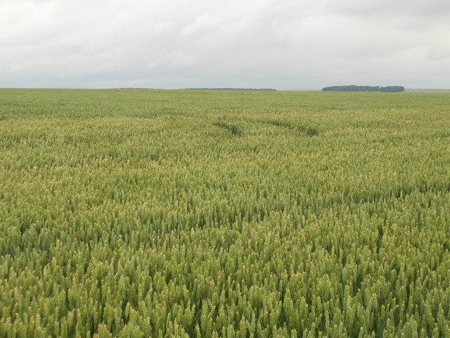 Crop field near Linton Wold Farm