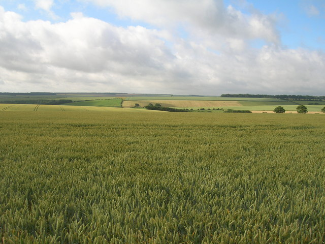 Farmland south of Wold Road