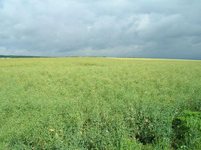 Farmland near  Rayslack House