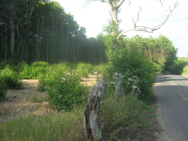 Coppiced section of Trenleypark Wood
