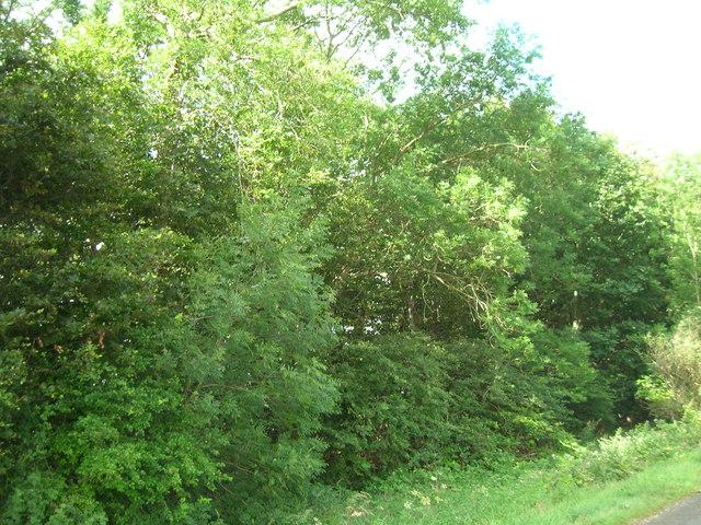 High Mowthorpe Plantation