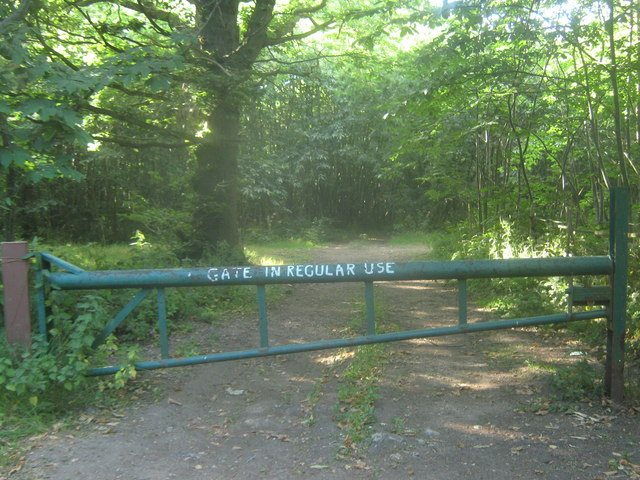 Track in Trenleypark Wood