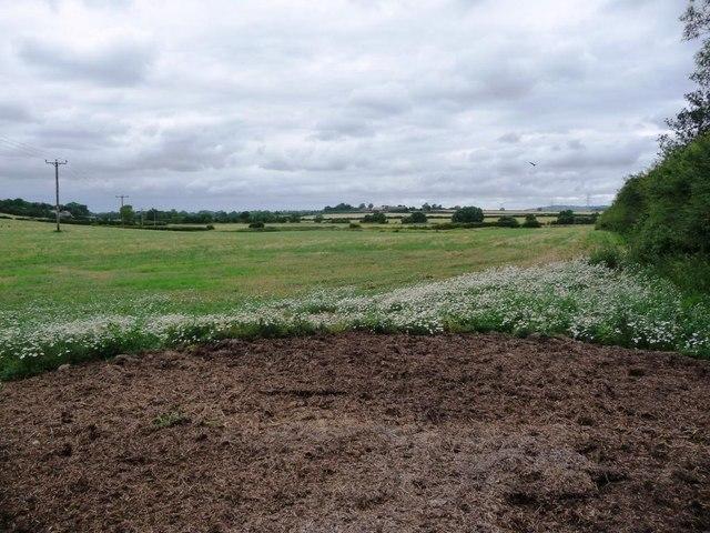 Field alongside Quarry Wood
