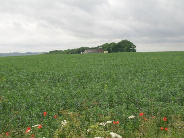 Farmland looking towards High Bellmanear Farm