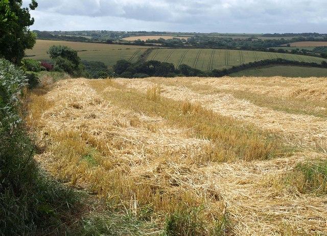 Field near Trebarber