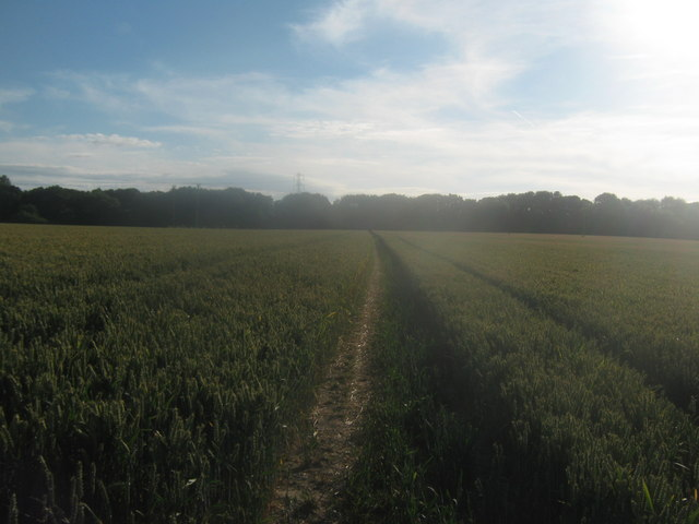 Stour Valley Walk towards Chequers Wood