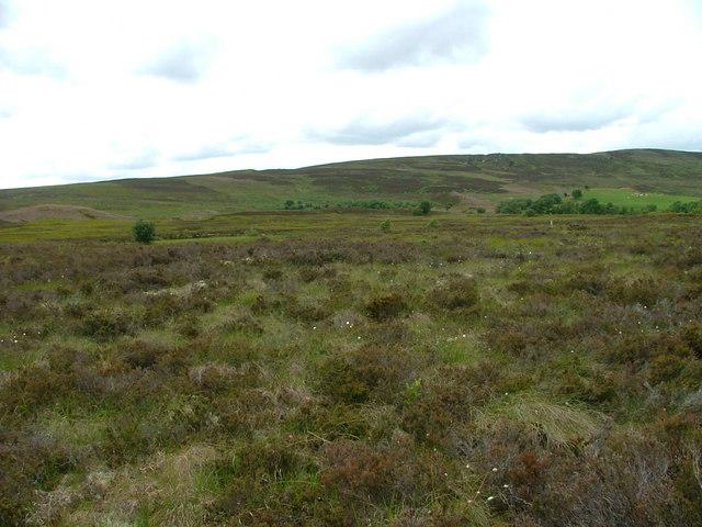 Moorland west of Dava