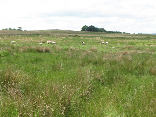 Rough pastures east of Rowfoot