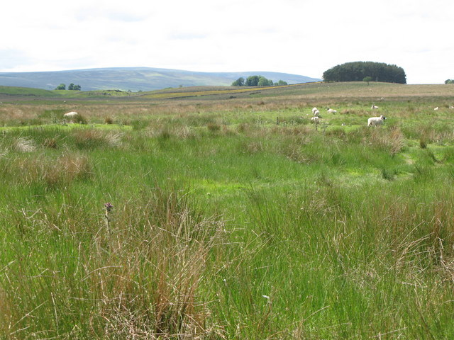 Rough pastures east of Rowfoot (2)