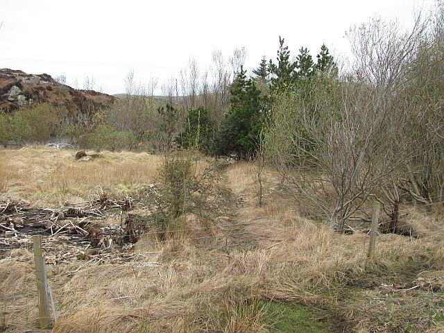 Woodland, Fleoideabhagh