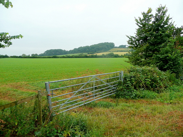 View to Handley Wood
