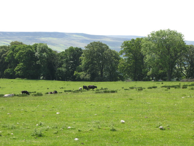 Pastures and woodland east of Featherstone Castle