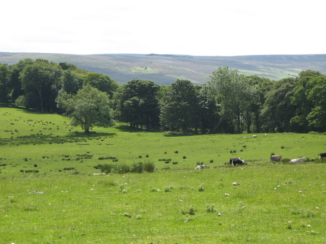 Pastures and woodland east of Featherstone Castle (2)