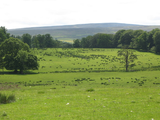 Pastures and woodland east of Featherstone Castle (3)
