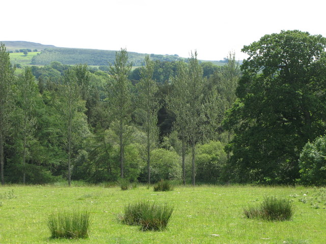 Pastures and woodland east of Featherstone Castle (5)