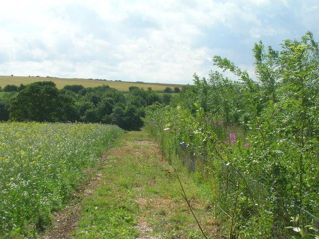 Field margin looking towards Nine Spring Dale