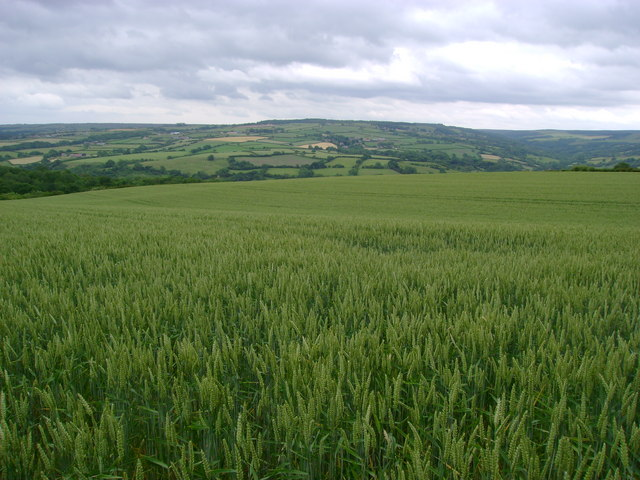 Wheatfield  with  the  Esk  Valley  beyond