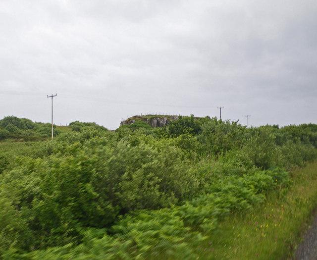 Dense wild roadside shrubbery along the main road of the Ross of Mull