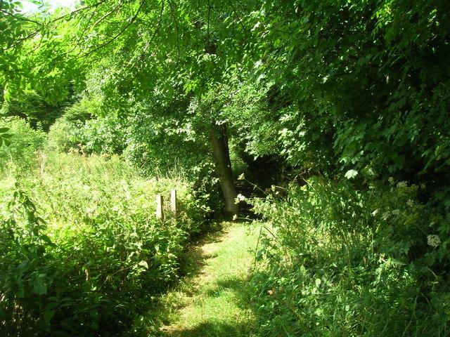 Wolds Way footpath Settrington Wood