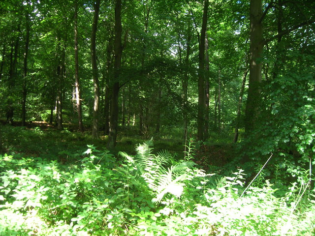 Rowgate Plantation
